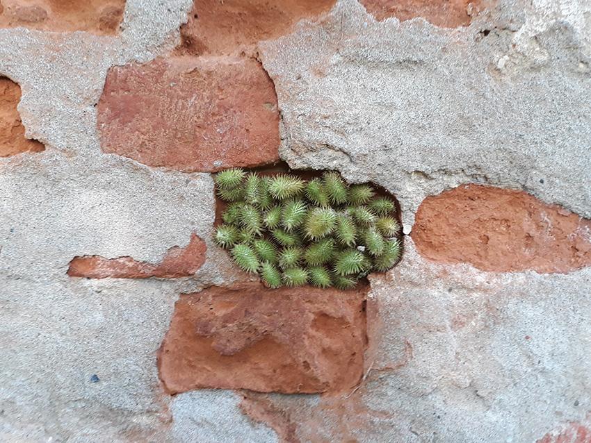 BRICK made with organic materiasl by Emanuela Camacci