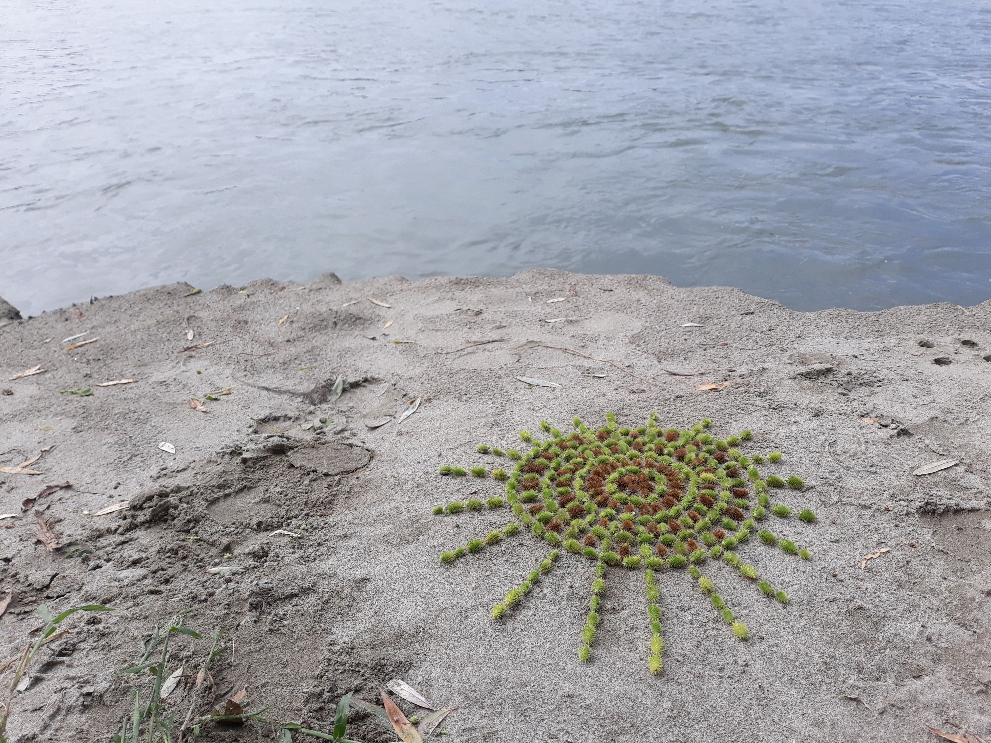 FLOWER emphimeral land art work made with organic materials by Emanuela Camacci